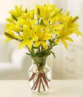Sunshine Gifts toHAL, sparsh flowers to HAL same day delivery