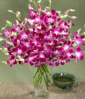 Exotic Orchids Gifts toPuruswalkam, flowers to Puruswalkam same day delivery