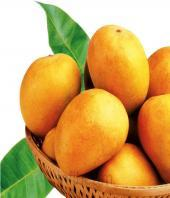Premium Alphonso Mangoes 24pcs Gifts toLalbagh, fresh fruit to Lalbagh same day delivery