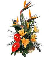 Tropical Arrangement Gifts toHSR Layout, flowers to HSR Layout same day delivery