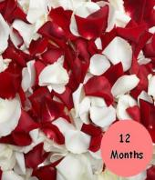 12 months of flowers Gifts toKoramangala, flowers to Koramangala same day delivery