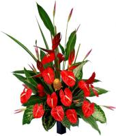 Beauty in Red Gifts toIndia, sparsh flowers to India same day delivery