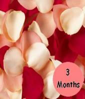 3 Months of Flowers Gifts toCV Raman Nagar, flowers to CV Raman Nagar same day delivery