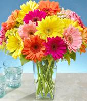 Colourful Surpriser Gifts toDomlur, flowers to Domlur same day delivery