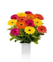 Cherry Day Gifts toCunningham Road, flowers to Cunningham Road same day delivery