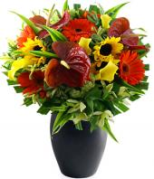 Seasons Best Gifts toHAL, sparsh flowers to HAL same day delivery