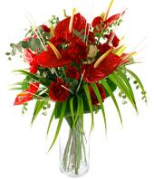 Burning Desire Gifts toHAL, flowers to HAL same day delivery
